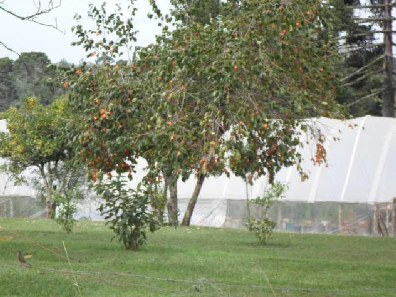 Chácara à Venda - Roseira