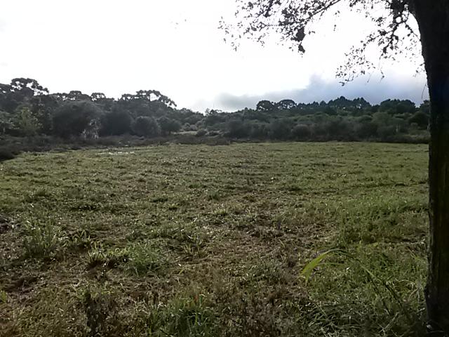 Chácara à Venda - Campo Redondo