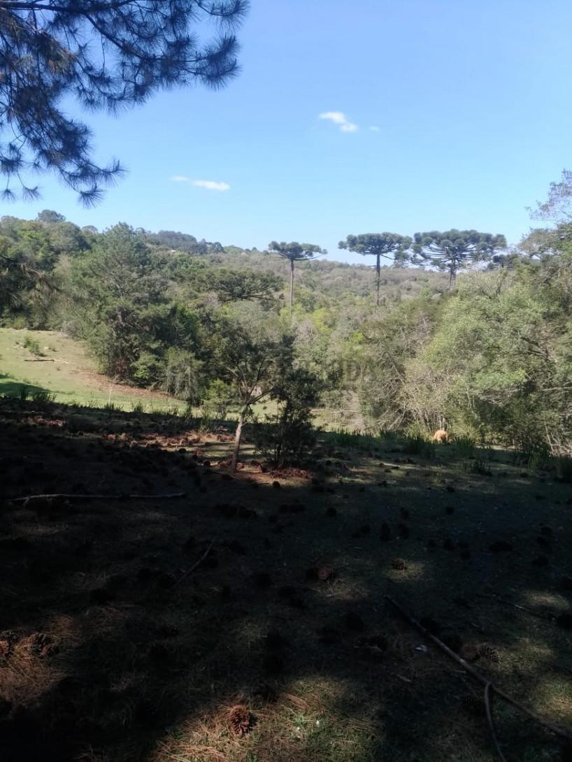 Foto 5 - TERRENO em CURITIBA - PR, no bairro Lamenha Pequena - Referência AN00083