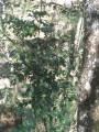 Foto 11 - TERRENO em CURITIBA - PR, no bairro Lamenha Pequena - Referência AN00083