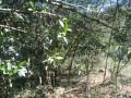 Foto 8 - TERRENO em CURITIBA - PR, no bairro Lamenha Pequena - Referência AN00084