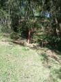 Foto 1 - TERRENO em CURITIBA - PR, no bairro Lamenha Pequena - Referência AN00084